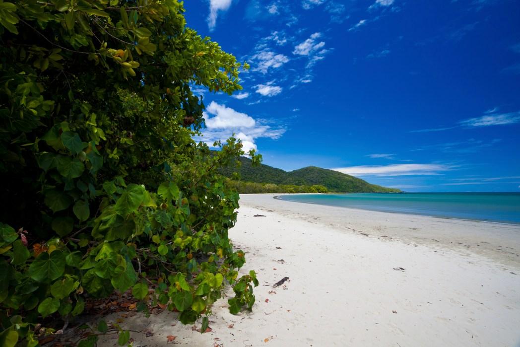 green trees and white sand beach australia